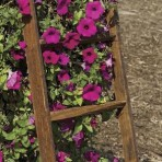 Gardening – Home Decor – Tobacco Lathe Ladder – Wide